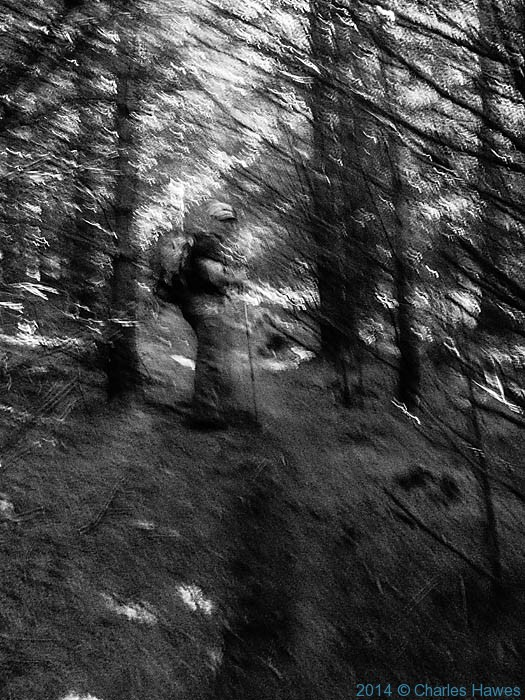 Paul Steer in the Mynydd Du Forest, photographed by Charles Hawes