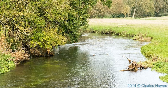 The Great Stour near Chartham, photographed by Charles Hawes