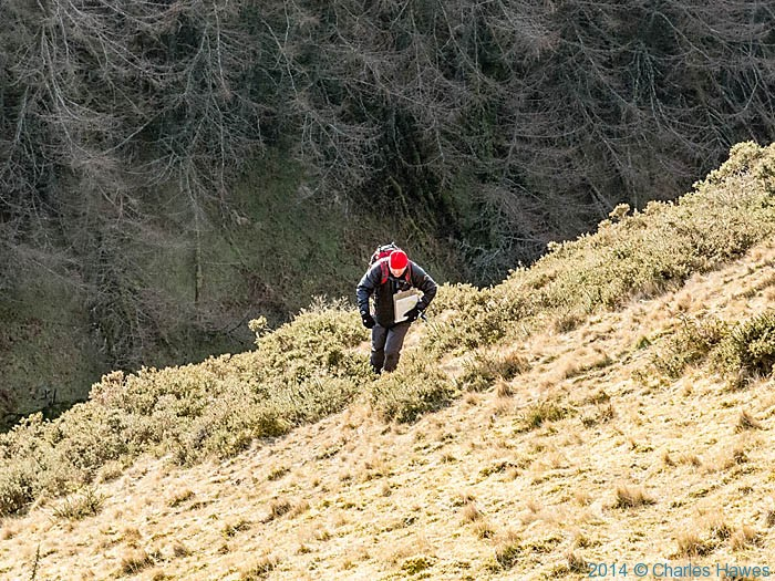 Climbing the side of the hill above the Afon Clywedog, Powys, photographed by Charles Hawes