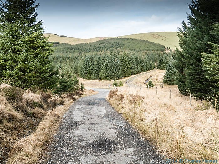 Forestry plantation below Plynlimon, photographed by Charles Hawes