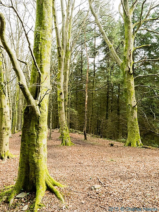 The Warren wood above Caerphilly, photographed on the Rhymney Valley Ridgeway by Charles Hawes