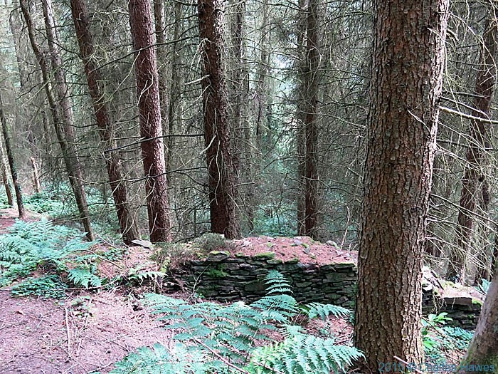 Woodland near Machen, photographed from The Cambrian Way by Charles Hawes