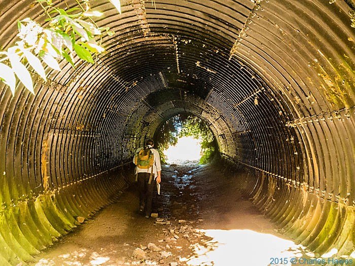 Tunnel in Pontypool Park photographed from The Cambrian Way by Charles Hawes