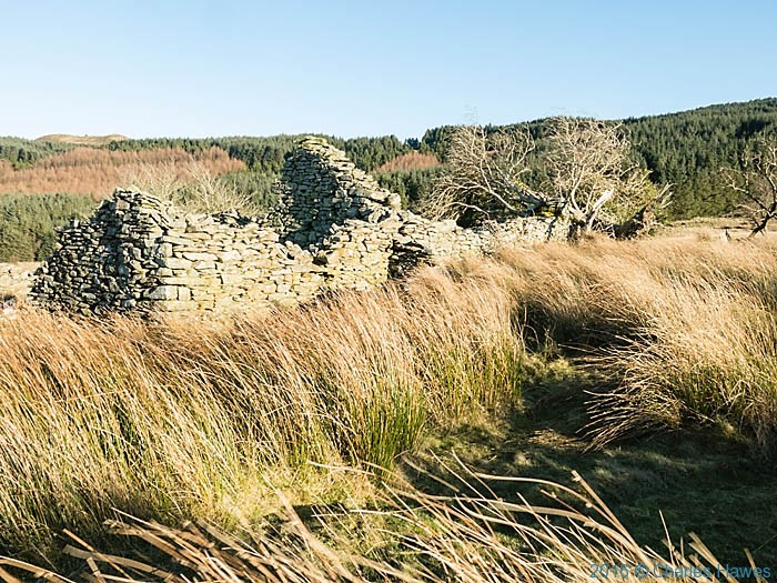 Ruined farmhouse on the edge of the moor below Garn Gron in Ceredigion photographed from the Cambrain Way by Charles Hawes