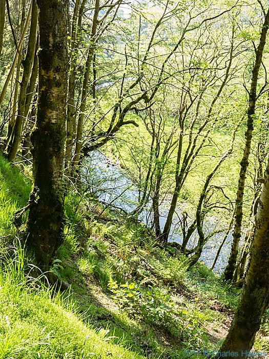 View to the river Ceiriog from footpath near llanarmon Dyffryn Ceiriog, photographed by Charles Hawes