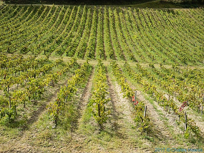 Vineyard near Vieux, France, photographed by Charles Hawes