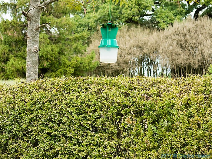 Moth trap against Box Tree Csaterpillar near Andillac, France, photographed by Charles Hawes