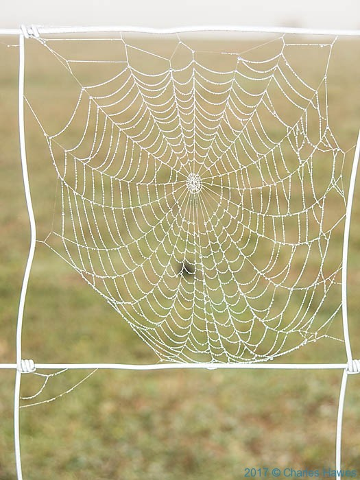 Cobweb by the GR46, France, photographed by Charles Hawes