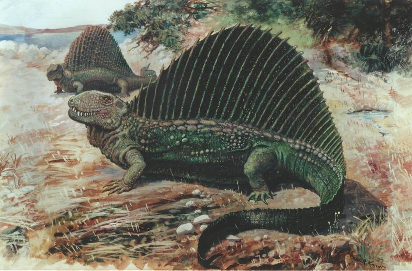 Dimetrodon and Edaphosaurus