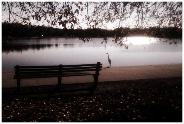charleston-sc-colonial-lake-harleston-village