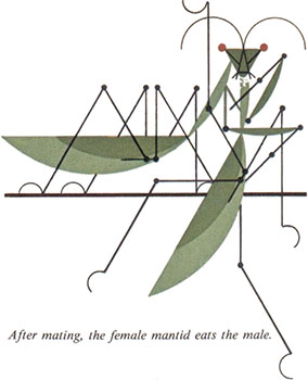 Pray Mantis | Charley Harper Prints | For Sale