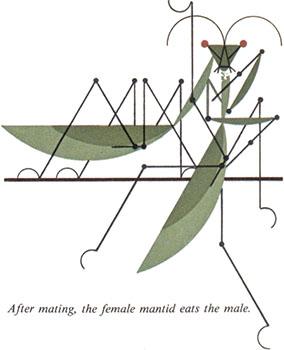 Pray Mantis | Charley Harper Prints | For Sale