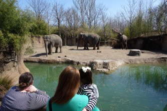 Three of the many Asian elephants they had