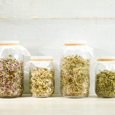 Sprouting seeds in a jar. An easy way to grow fresh keto greens at home during the winter