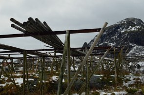 Cod racks in Lofoten