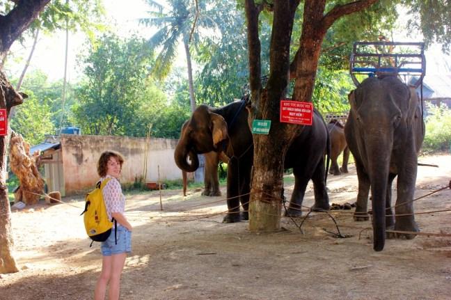 ride elephant vietnam