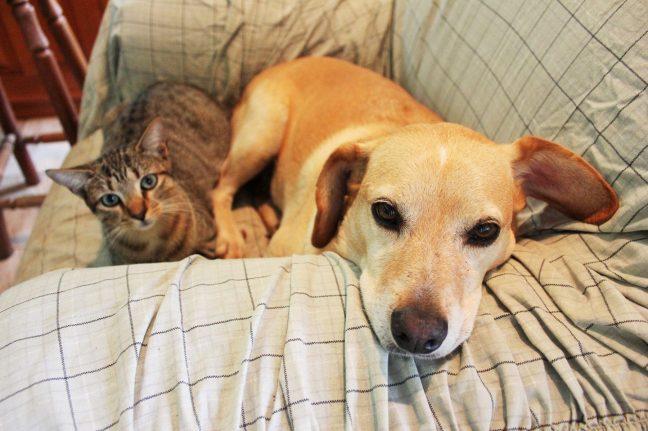 Sadie & Max