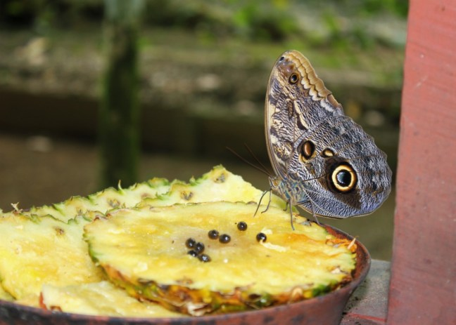 Butterfly garden Hacienda Baru Costa Rica