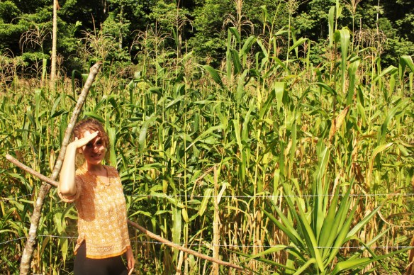Charlie in a corn field at Isla Violin - Charlie on Travel
