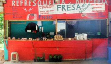 We stopped at this roadside strawberry stand