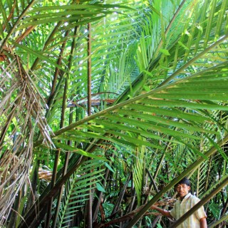 Learning the uses of palm leaves with huai raeng community trat thailand - charlie on travel