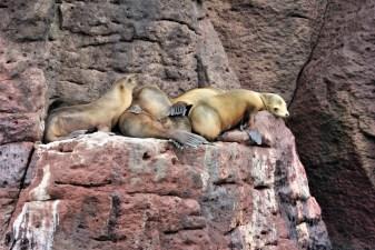 Swimming with Sea Lions at Isla Espiritu Santo La Paz Mexico