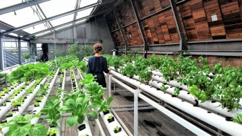 Greenhost Boutique Hotel Creative Farm rooftop - green hotel Yogyakarta Travel Guide