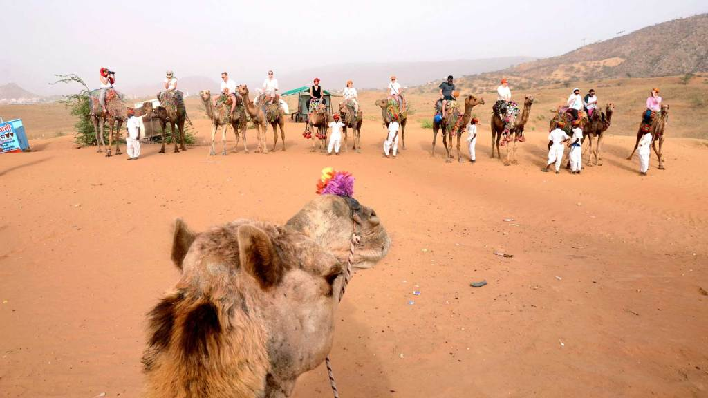 10 Unique Things To Do In Pushkar, India