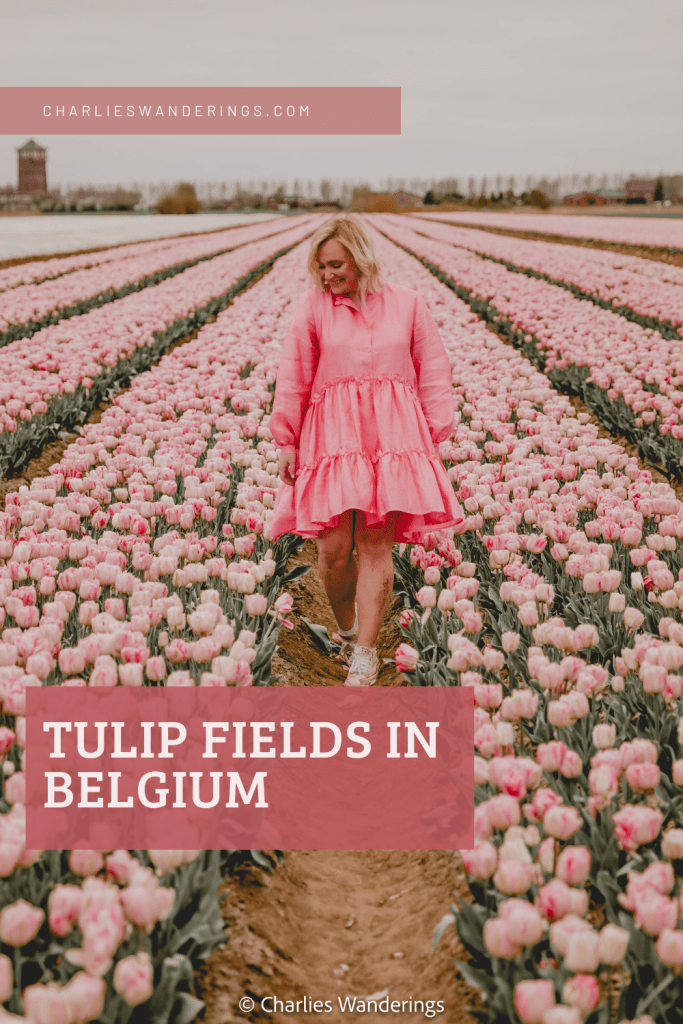 The Best Place to see Tulips in Belgium - Map Included