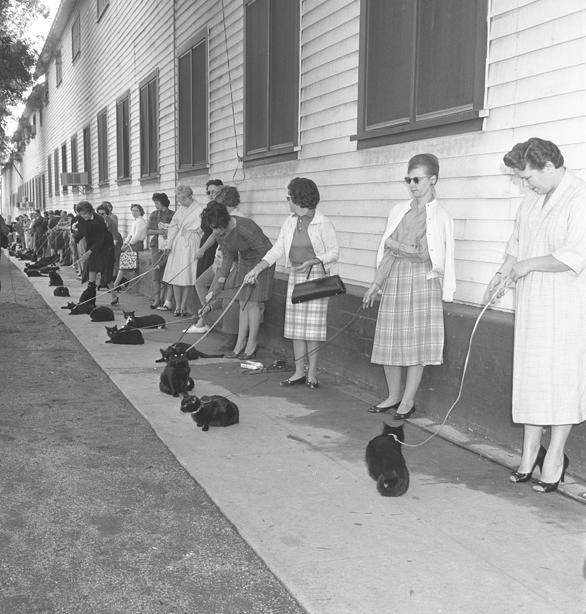 """Casting czarnych kotów, ale nie do serialu """"Siedem życzeń"""". Los Angeles, 1961"""