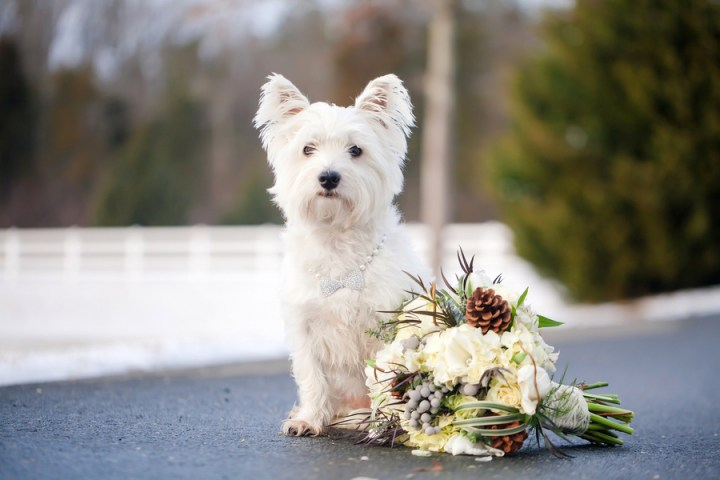 A Holiday Style Shoot with Christmas Time Wedding Inspiration