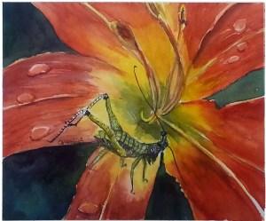 Grasshopper on Day Lily