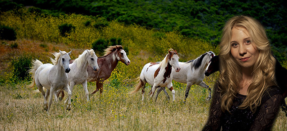 The-Little-Horses-Blog