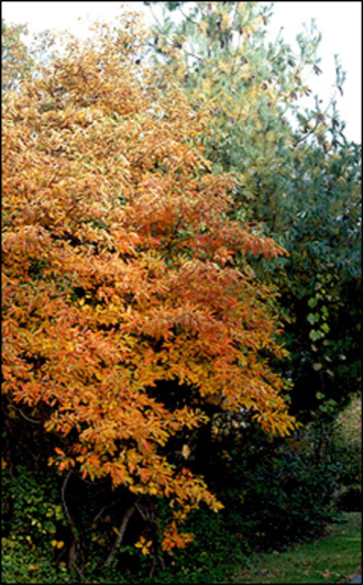 SA_tree