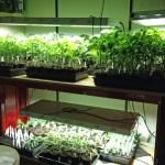 real estate agent Virginia Gardner starts her Charlottesville garden indoors