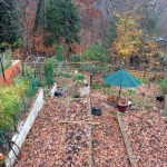 charlottesville vegetable gardening
