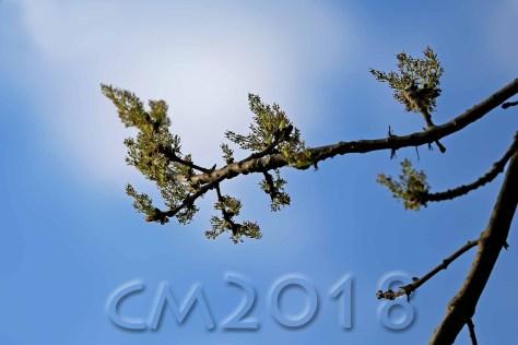 Die Bäume schlagen aus, Autor: Charlotte Moser