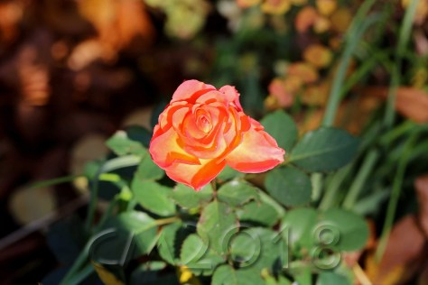 Gartenblumen, Autor: Charlotte Moser
