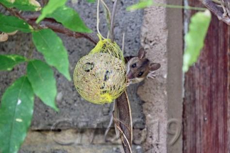 Maus im Garten, Autor: Charlotte Moser