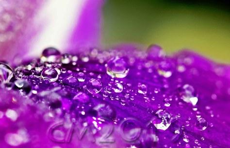Frühlingsregen II, Autor: Charlotte Moser