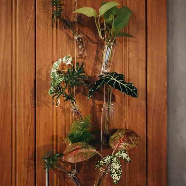装飾屋内庭園のアイデアjungleintheclub