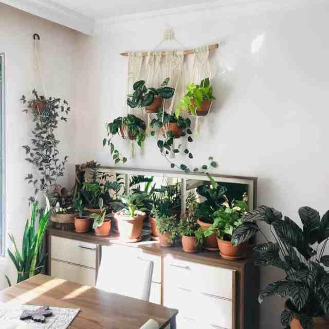 ハンギングプランター屋内ガーデンのアイデアtrhouseplants