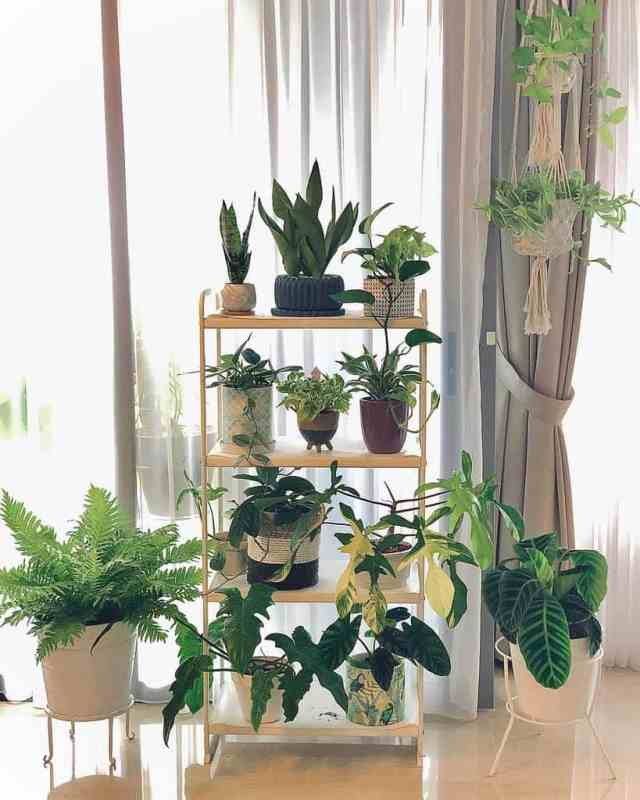 垂直屋内庭園のアイデアilovebeautifulplants88