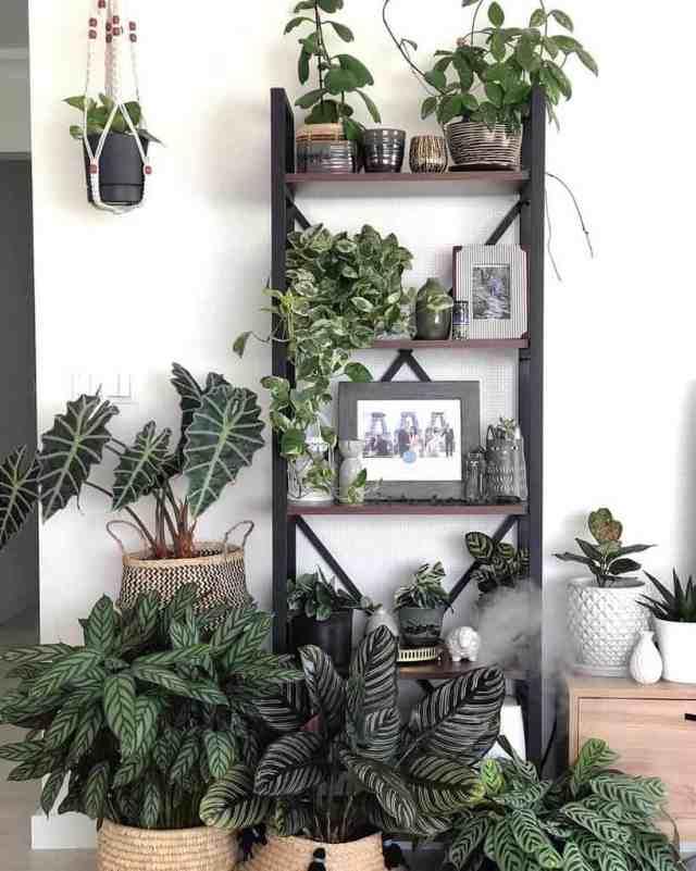 垂直屋内庭園のアイデアjann.kus