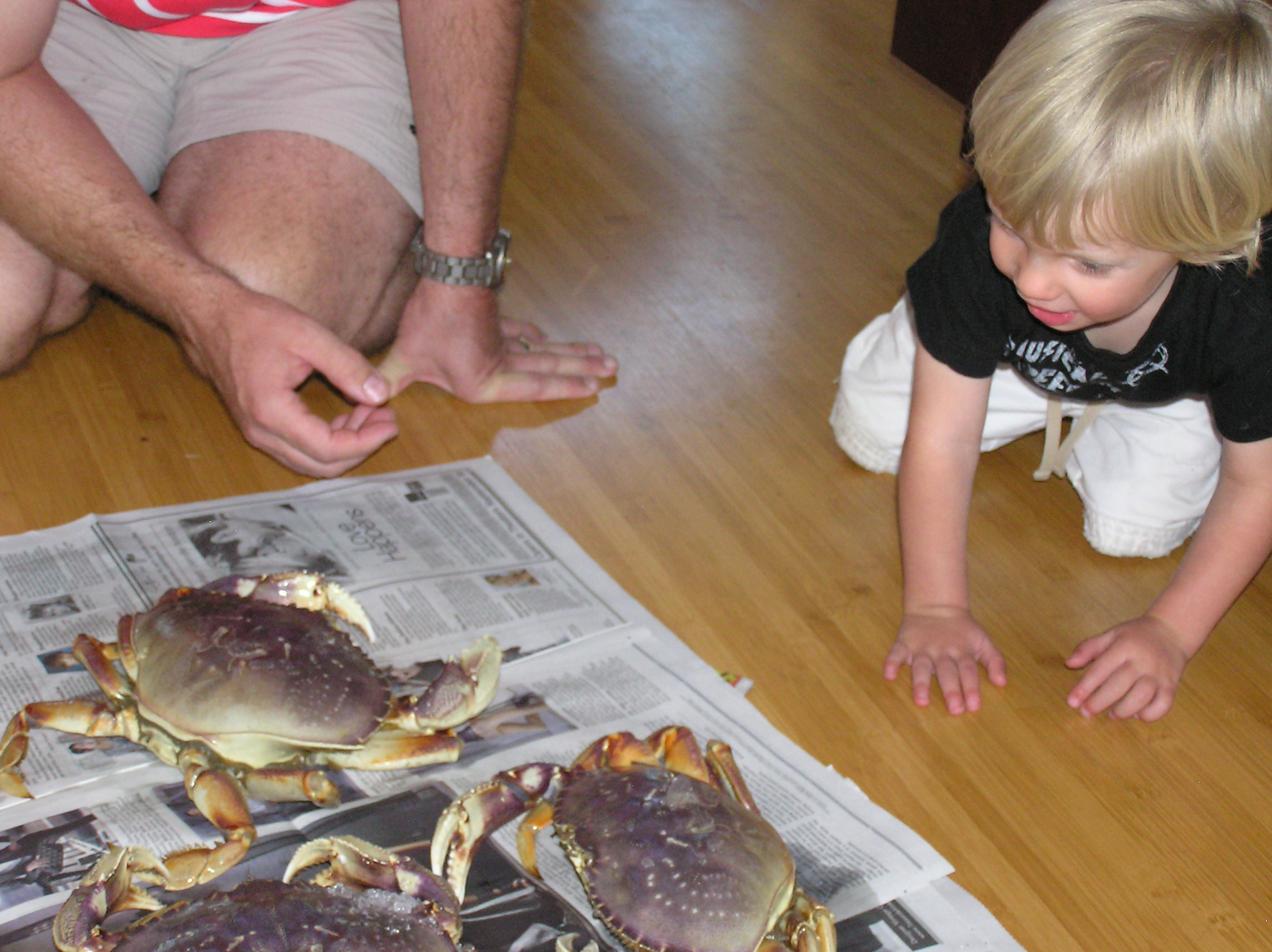 Quin meets his dinner--fresh dungeness crab
