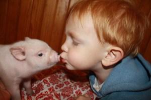 linc kisses pig