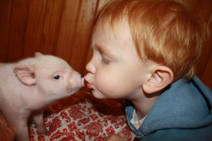 linc kisses pig