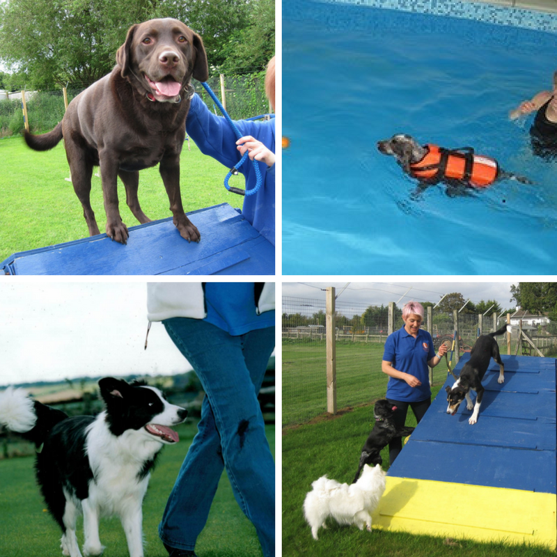 Extra activities dog agility, obedience training, canine hydrotherapy and field walks