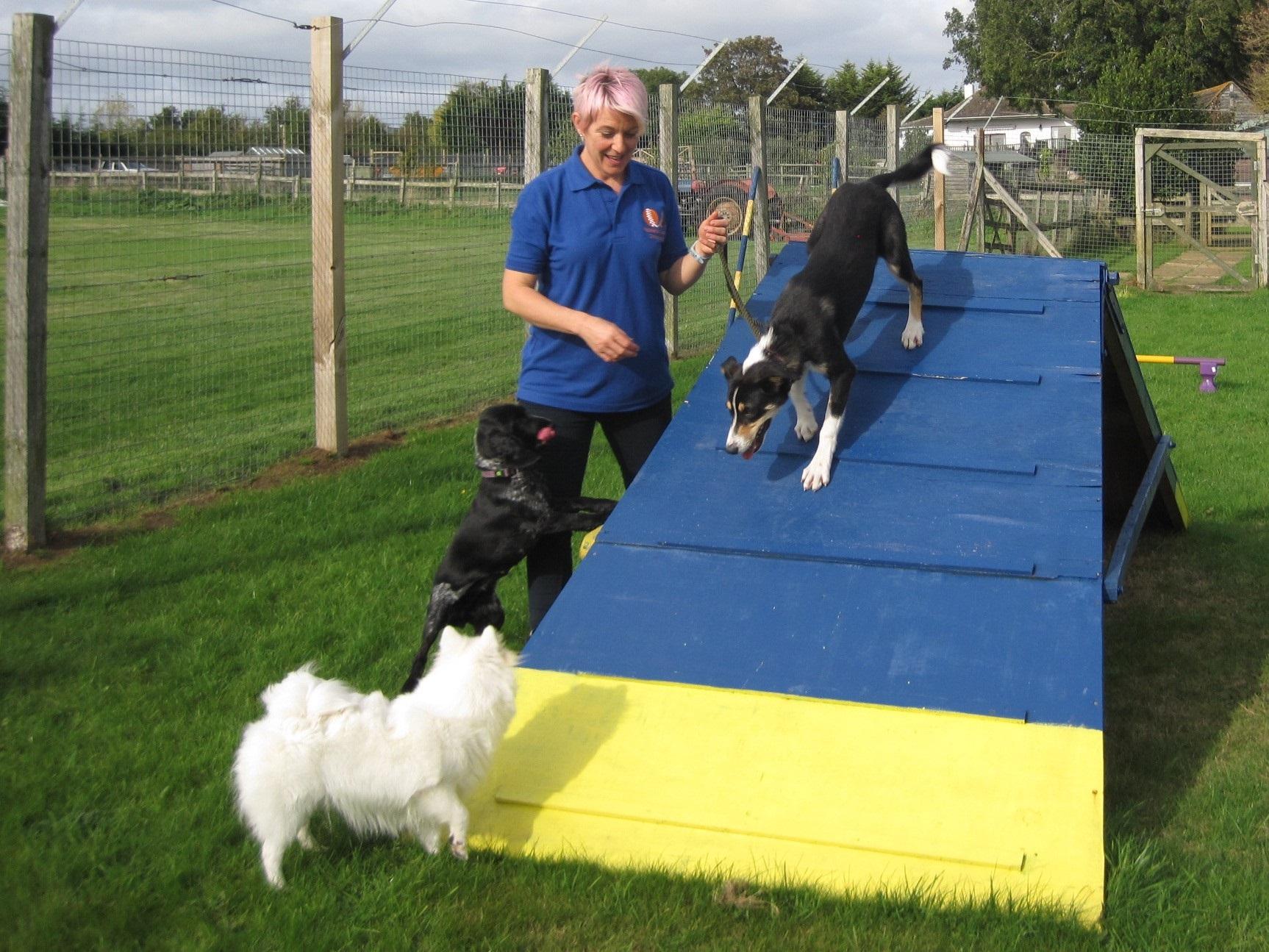 Dog agility A frame - Charney Pet Care Centre