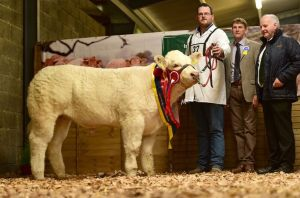 junior-female-calf-champion-cassina-maura-with-richard-poyntz-judge-colin-wight-and-kevin-maguire-president-iccs